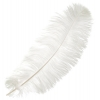 "Ostrich Drab Feathers 6-8"" Premium Quality White"